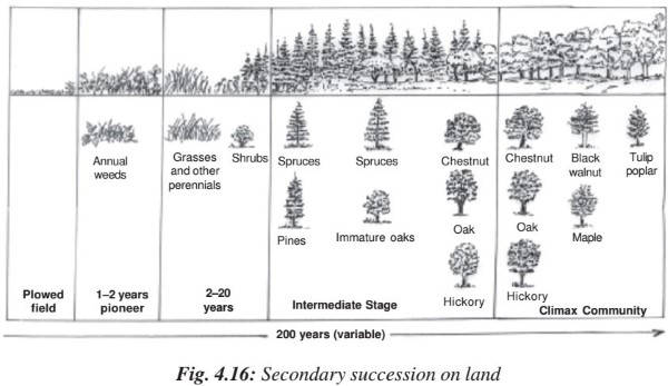 Ecological Succession Primary Secondary Succession