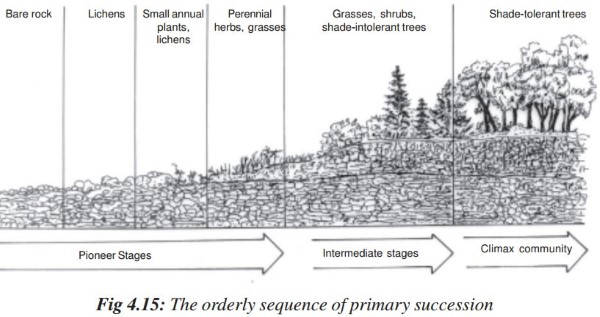 Ecological succession: Primary & Secondary Succession