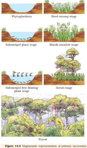 Ecological Succession Primary & Secondary Succession