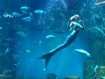 La Rencontre Avec Sirne De L'aquarium Paris