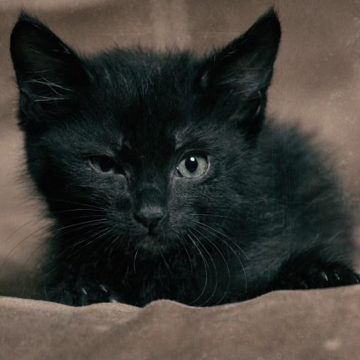 Evil Eye (Kitty Edition)