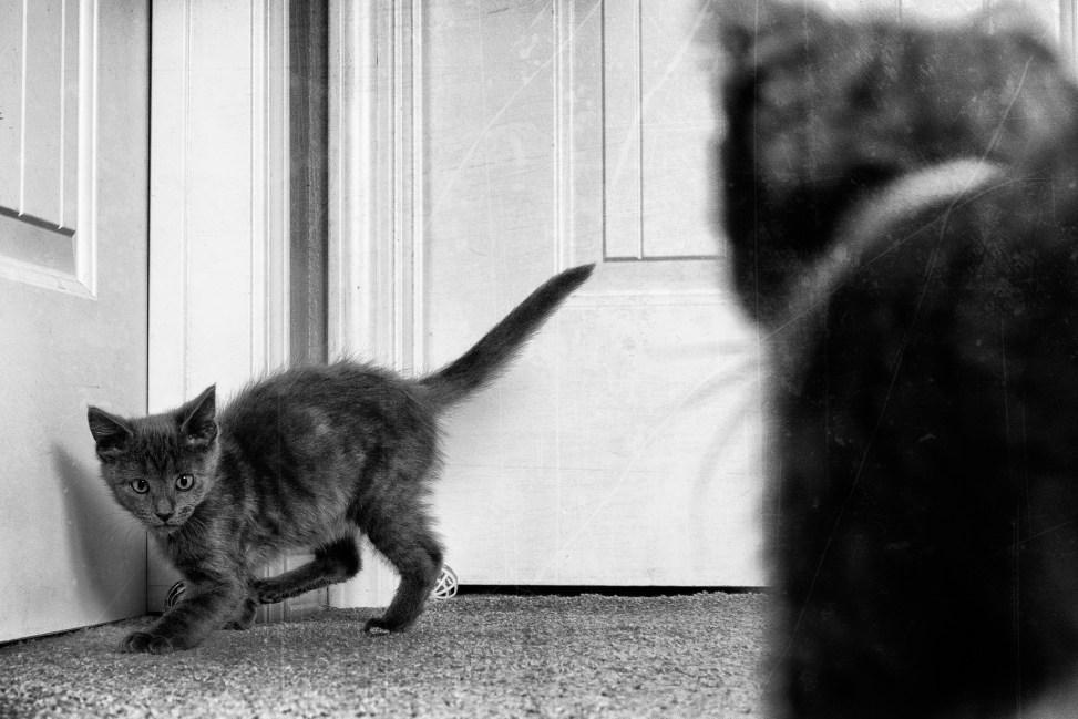 Scaredy Cat
