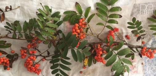 cotton bud fall wreath berries
