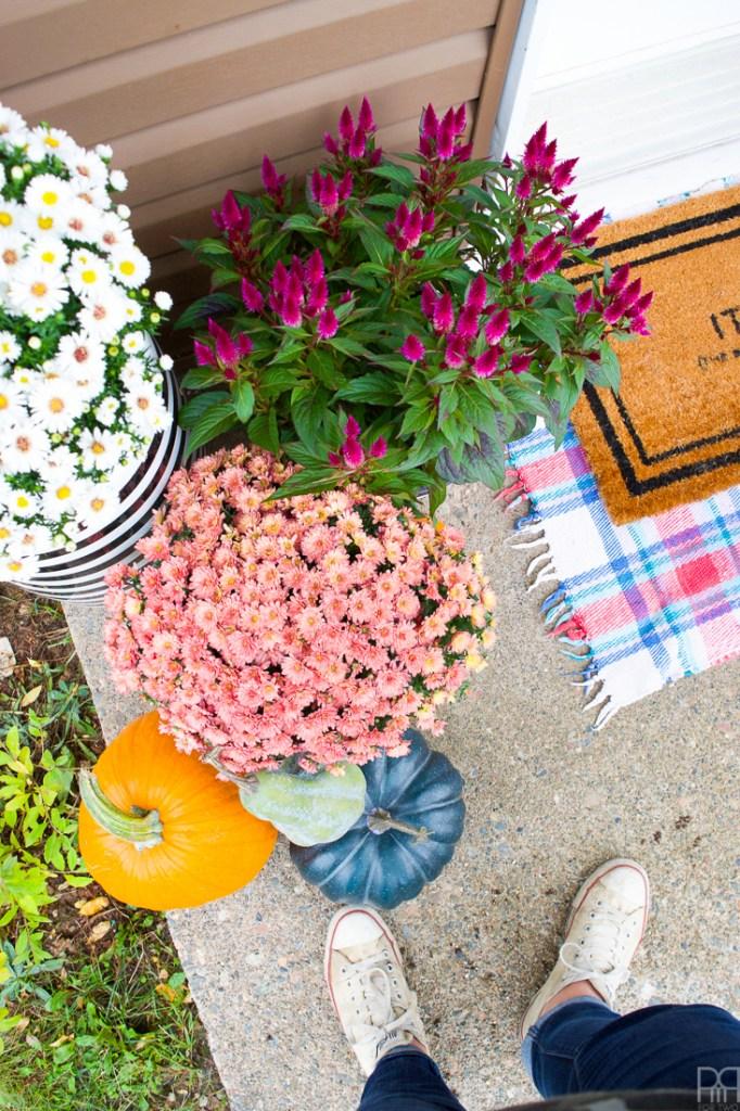 fall mums on a doorstep