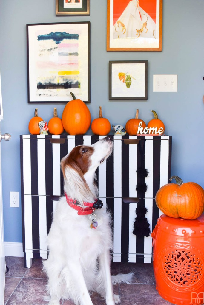 black and white striped dresser with pumpkins and dog