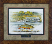 """Cover art of """"Water Songs"""" by David Ruimveld. This original was created on watercolor paper and framed with two of Bob Linesnman's flies in a shadow box style. This was framed with acid free material and Conservation Clear glass in a burl frame. The frame size is 24"""" x 28""""."""