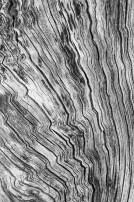 03_martin-ondko-3-krasa-dreva-i