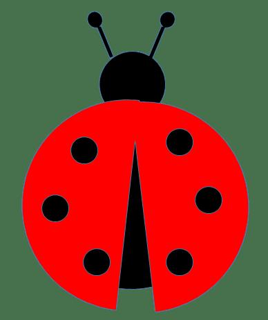 ladybugs transparent