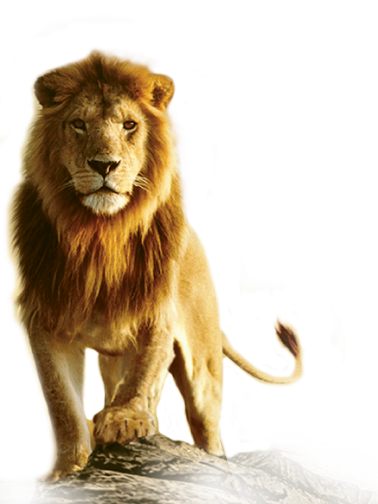 Free Animated Wallpaper Backgrounds Lion Png Transparent Images Png All