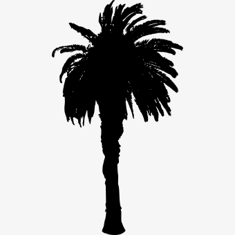 For the film, see woodshop (film). Palm Tree Vector Png Date Tree Clip Art Transparent Png 7541837 Png Images On Pngarea