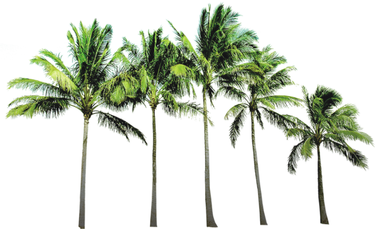 Coconut Tree Free PNG Image PNG Arts