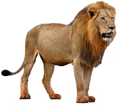 Lion Png Image With Transparent Background Png Arts