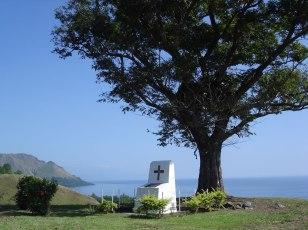 The Modawa Tree
