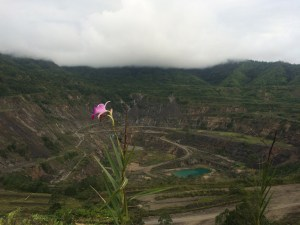 A flower blooms in Panguna.