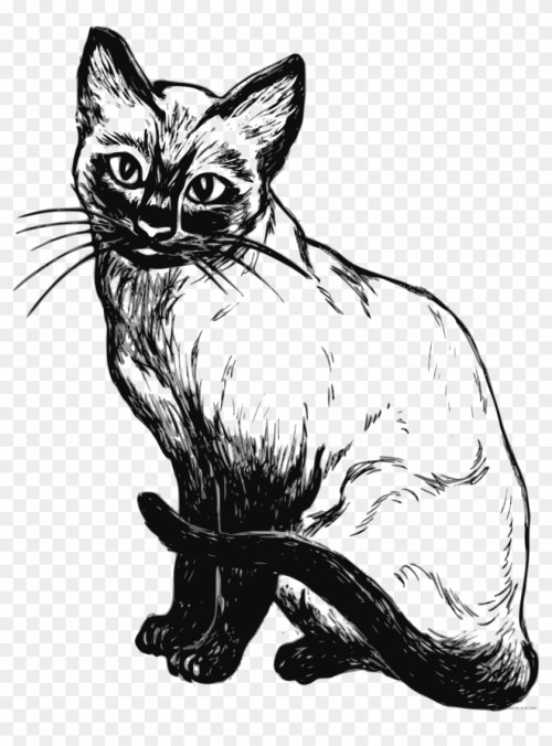 small resolution of cat clipart black and white real cat clipart black and white hd png download
