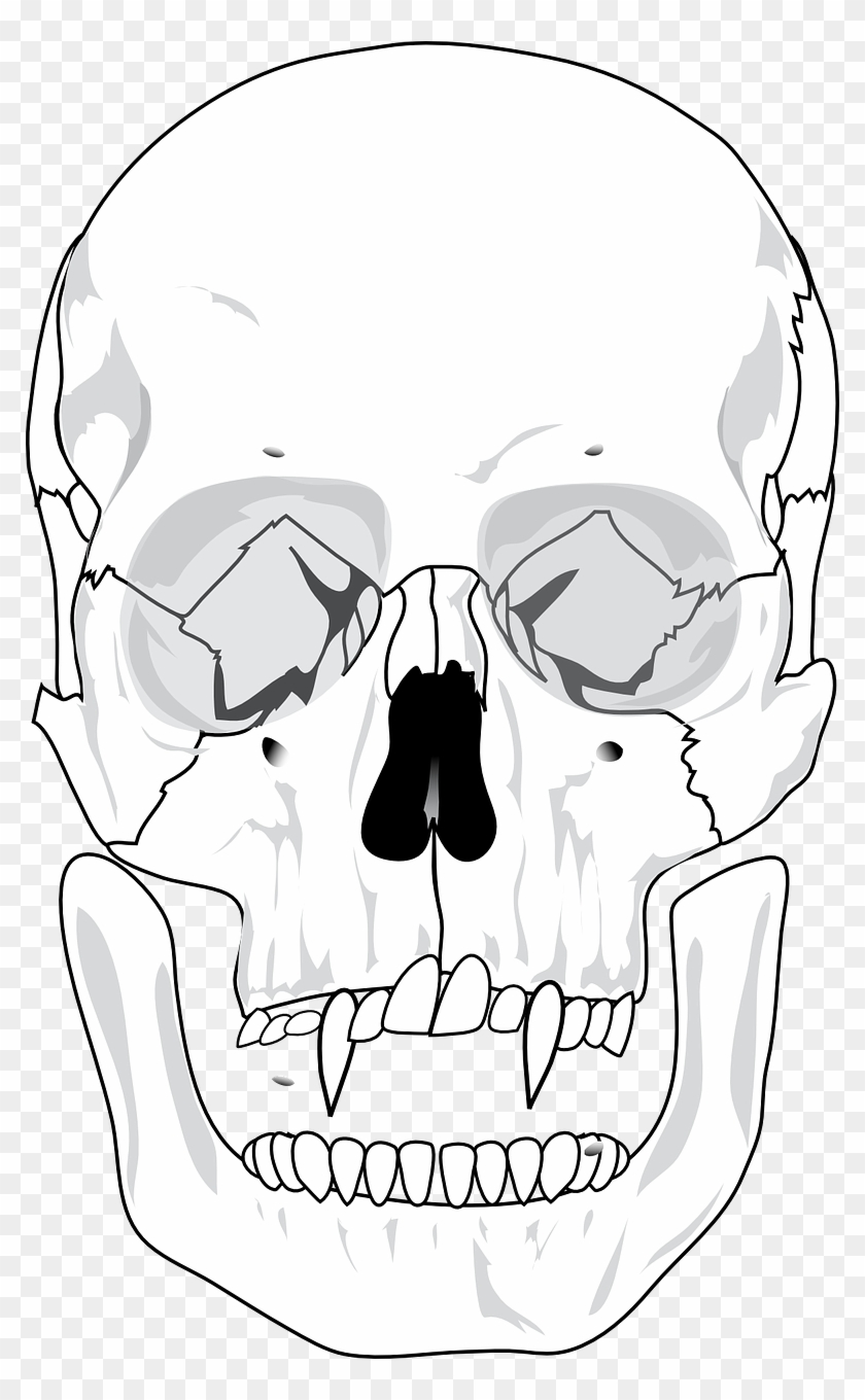 hight resolution of evil skull devil skull unlabeled diagram hd png download