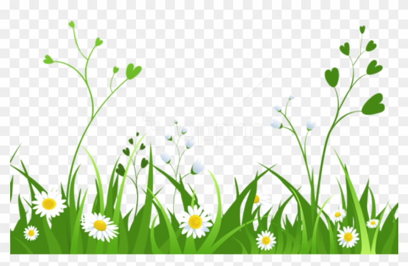 free png daisies with