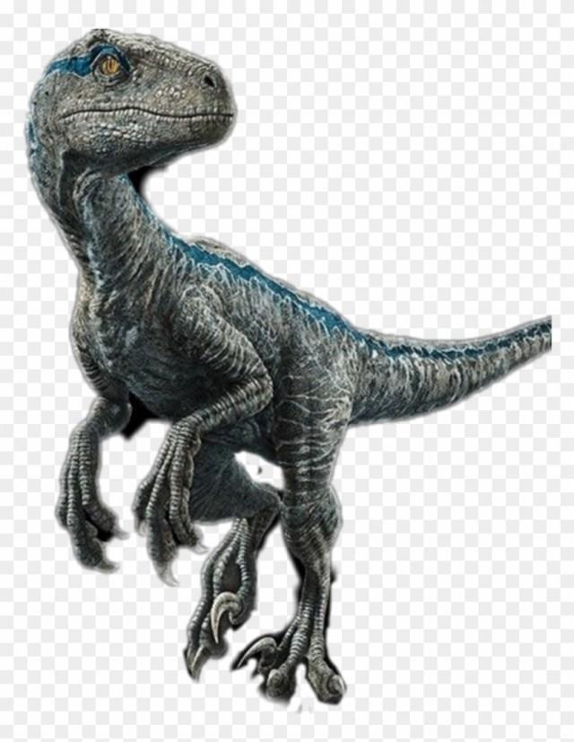 blue, #velociraptor , #raptor, #jurrasicworld - Blue Velociraptor