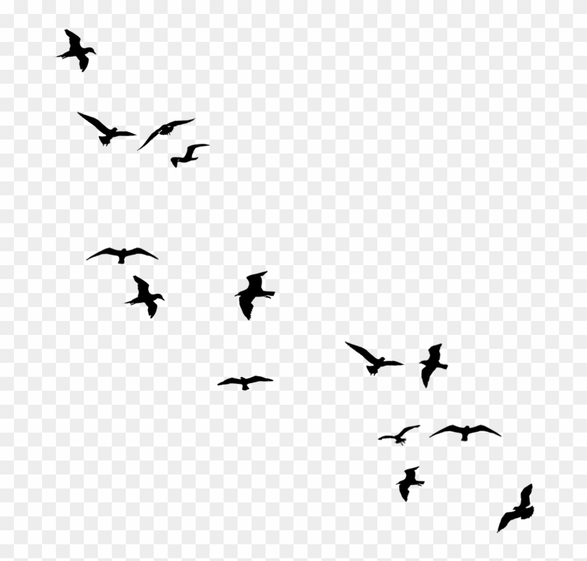 Flying Bird Silhouette Png Birds Flying Away Drawing Transparent Png 800x800 441258 Pngfind
