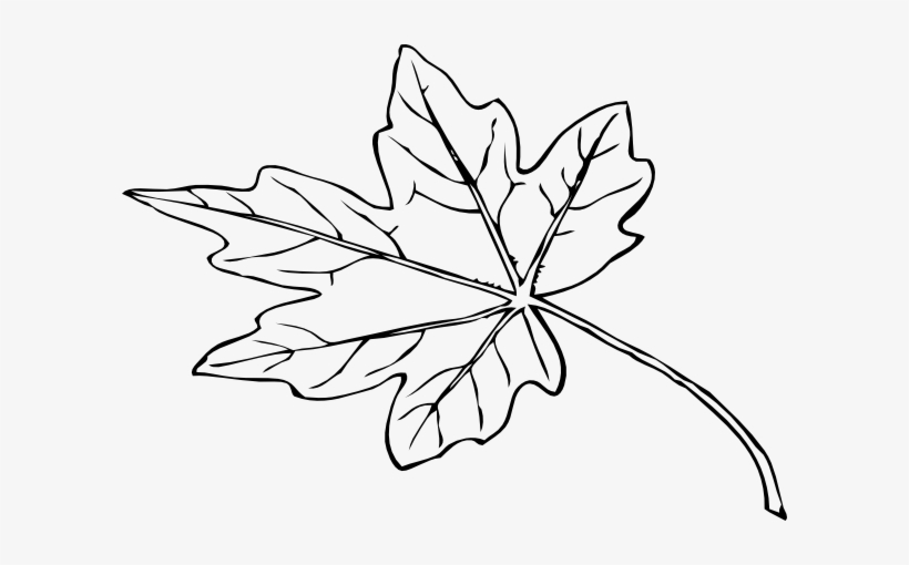 Fall Leaf Outline Png Papaya Leaf Black And White Free Transparent Png Download Pngkey