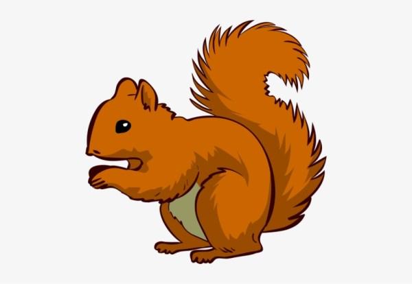 clipart squirrel