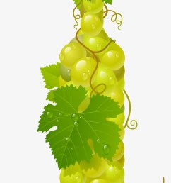 grapevine clipart pattern grapes vector [ 820 x 1552 Pixel ]