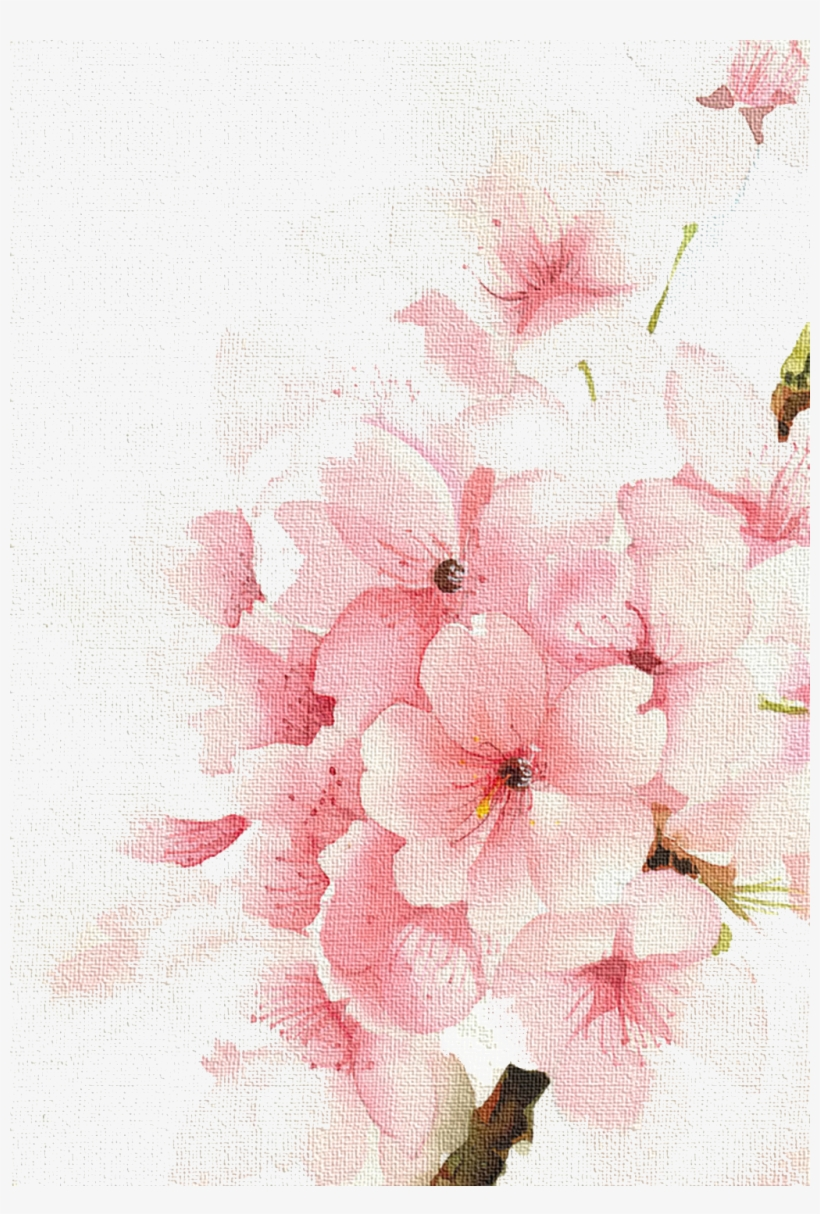 cherry watercolour watercolor blossoms