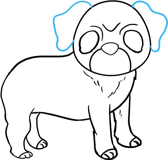 Download How To Draw Pug Drawing Full Size Png Image Pngkit