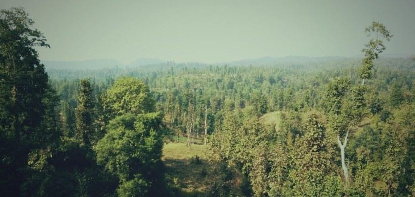वन सखाप पारेर ढुंगाखानी, प्रजिअसहित सञ्चालकलाई कारबाही गर्न अख्तियारमा सिफारिस