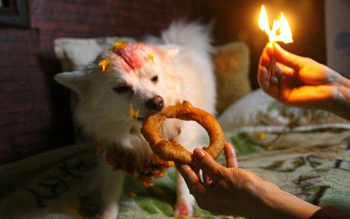 यमपञ्चकको आज दोश्रो दिन : भैरवको बाहन कुकुरको पूजाआजा गरी मनाइँदै