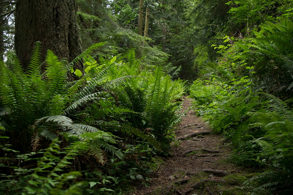 The Pass Lake Trail in Deception Pass State Park