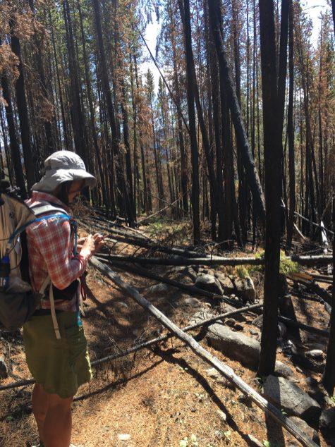 """Thru-hiker, Liz """"Snorkel"""" Thomas surveys the damage to the Boundary Trail following the Diamond Creek Wildfire of 2017."""