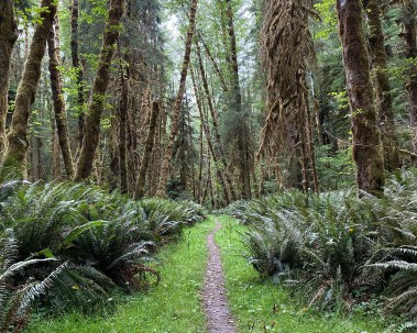 Bogachiel Trail