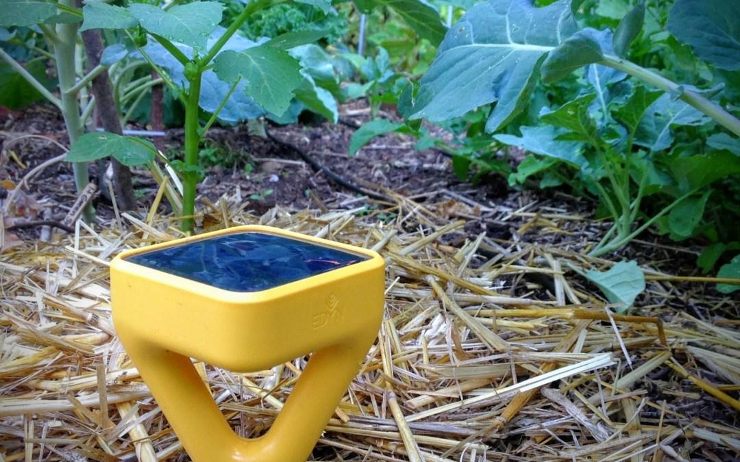 Going on in the 'PNW from Scratch' Garden – My Garden Journal – August 2015