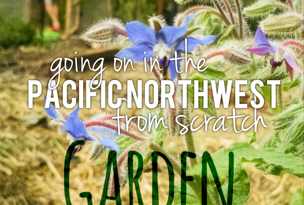 Going on in the PNW Vegetable Garden – September Photo Tour & Garden Journal