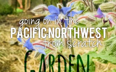 Going on in the PNW Vegetable Garden – September Photo Tour & Garden Journal