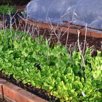 DIY Garden Planting Calendar - Hands Down the Most Time-Saving Section of My Garden Journal - PNW from Scratch_1