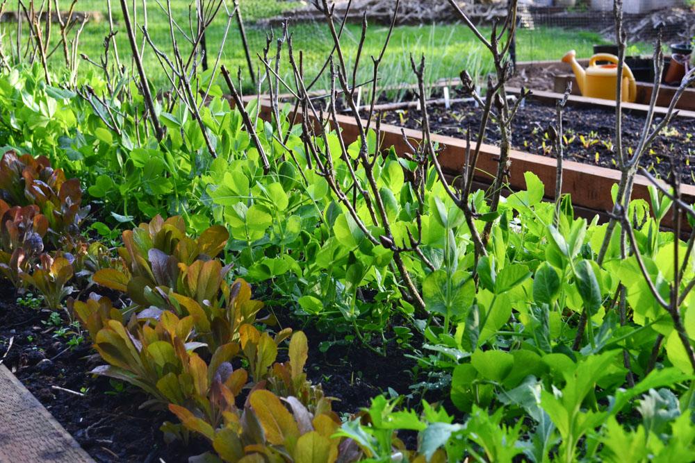 DIY Garden Planting Calendar – Hands Down the Most Time-Saving Section of My Garden Journal