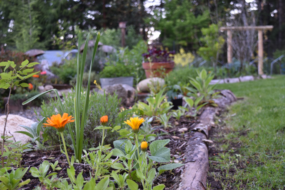 May in the PNWfromScratch Garden 2016_11