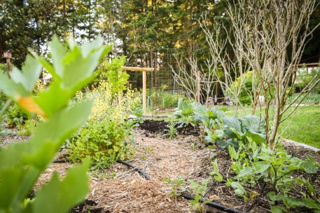 May in the PNWfromScratch Garden 2016_13