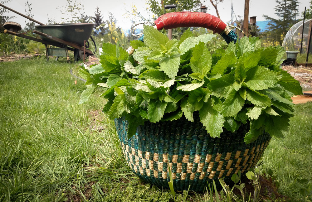 12 Reasons to Grow Your Own Herbs!