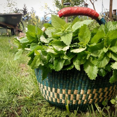 12 Reasons to Grow Your Own Herbs