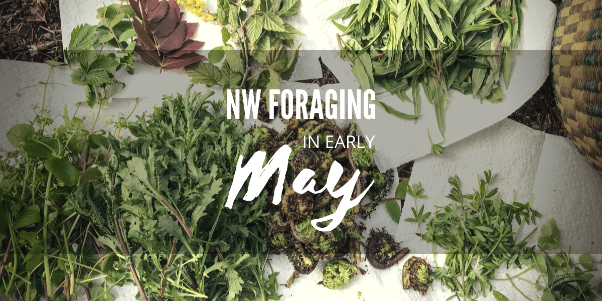Northwest Foraging – 9 Wild Foods to Gather in Early May