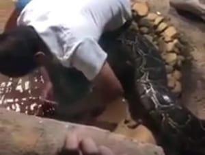 【閲覧注意】動物園の巨大ニシキヘビ餌やりイベント、衝撃の事態に・・・(動画)