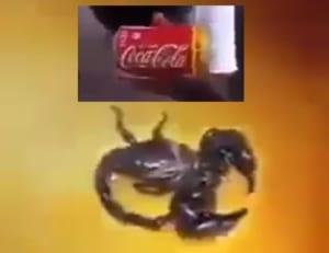 【驚愕】水を掛けても平気なサソリに「コカ・コーラ」を掛けた結果すごい事に・・・