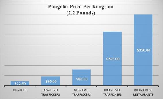 Pangolin price per kilogram.