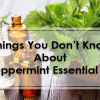 Peppermint Essential Oil – Uses And Benefits Revealed!