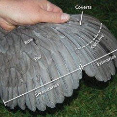 Duck Wing Diagram Nissan Almera Wiring Guide To Clipping For Chickens Pocket Farm Magazine