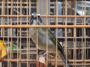 Os oito pássaros serão avaliados por uma bióloga.