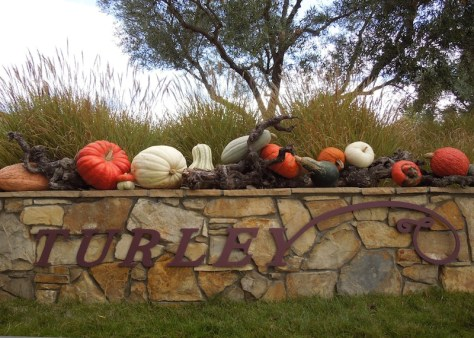 Autumn Display of Squashes on Wall of Turley Winecellars